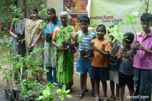 FREE saplings in your city! – Plant one and make your city green!
